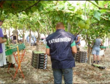 """Continuano i controlli a tappeto dei Carabinieri in materia di """"caporalato"""" nelle campagne del Tarantino"""