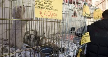 Cuccioli in vendita alla Fiera del Levante. L' Ente Fiera viola il regolamento comunale del Comune di Bari.
