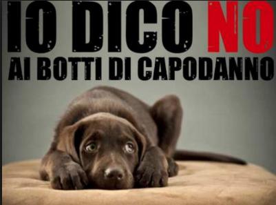Capodanno: il vademecum per proteggere cani e gatti dai botti