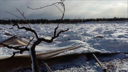 Emergenza neve. Il presidente nazionale della CIA Dino Scanavino in visita alle aziende pugliesi danneggiate