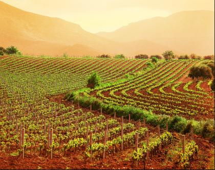 La Puglia che verrà, tra la quarta rivoluzione industriale e la roadmap per l'innovazione del settore agroalimentare