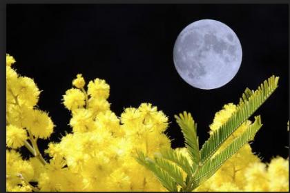 8 marzo. L'ipocrisia delle mimose