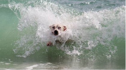 A Rimini i cani possono fare il bagno in spiaggia con i proprietari