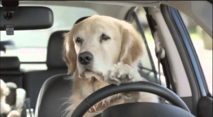 Tutto quello che si deve sapere sui viaggi in auto con cani e gatti