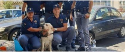 La Polizia salva a Napoli un labrador chiuso in auto sotto il sole a 40°